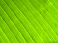 Season of banana leaves banana leaves background Stock Photos