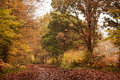 Season of mists mellow fruitfulness autumn colors in abbotts wood sussex seen through early morning mist Stock Photography