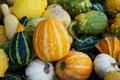 Seasonal gourds