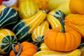 Seasonal gourds Stock Photos