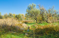 Seasonal landscape in central ukraine near dnepropetrovsk city Royalty Free Stock Images