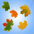 Seasonal Leaves Stock Images