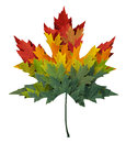 Seasonal maple leaf shape concept made from a group of autumn leaves as a design element and symbol of fall themed concept in an Stock Photos