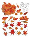 Seasonal set fallen leaves for design Stock Photo