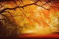 Sezónní les pokles chůze