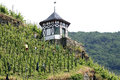 Seasonal workers in steep vineyard on the Moselle Royalty Free Stock Photo