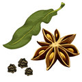 Seasoning star anise, leaf and dry grains. Vector