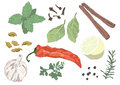 Seasonings set of flavourings in vector Stock Photo
