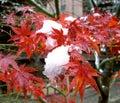 Seasons blending Royalty Free Stock Images
