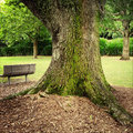 Seat in park next to large tree Stock Photos