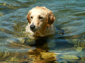 SEATING DOG Royalty Free Stock Photo