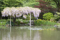 Seattle japanese garden beautiful flowers in Stock Photography