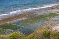 Seaweed algae plantation in nusa penida island indonesia Royalty Free Stock Images