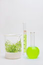 Seaweed bioenergy using algae as an alternative energy source liquid of useful compounds extracted from Stock Photo