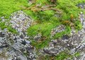 Seaweed coastal detail including fresh green and stones seen in brittany france Royalty Free Stock Photos