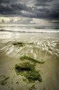Seaweed at the coastline with wave lapping on the shore Royalty Free Stock Photo