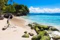 Seaweed covered rocks on atlantic coast at dominican republic ocean Stock Photos