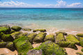 Seaweed covered rocks on atlantic coast at dominican republic ocean Royalty Free Stock Images