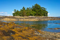 Seaweed covered rocks island trees background against blue sky coast maine Stock Photo