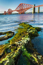 Seaweed and Forth Road Bridge in Scotland Stock Image