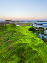 Seaweed lying on the beach summer morning Royalty Free Stock Images