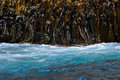 Seaweed on rock in sub antarctic waters Royalty Free Stock Images