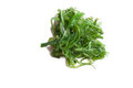Seaweed salad with sesame seeds isloated on whitem veiw from the top Stock Photo