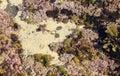Seaweed shells etc in rockpool on seashore Royalty Free Stock Photo