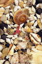 Seaweed, shells and pebbles Stock Photography