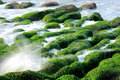 Seaweed and Spray Royalty Free Stock Photo