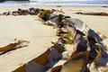 Seaweed washed up on sunny beach long sandy Royalty Free Stock Photo