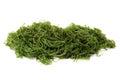 Seaweed on a white background Royalty Free Stock Photos