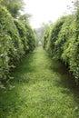 Secret green low tree lane Royalty Free Stock Photo