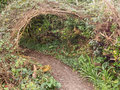 Secret path, tunnel through undergrowth on footpath. Brambles et Royalty Free Stock Photo