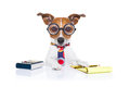 Secretary accountant dog jack russell with calculator a note pad and pencil beside isolated on white background Stock Image