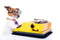 Secretary typewriter  dog Royalty Free Stock Photo
