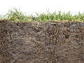 Section of grass cross and soil against white background Royalty Free Stock Image