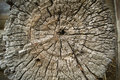 Old Wood Tree Rings Texture Royalty Free Stock Photo