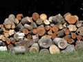 Sections of Tree Trunk Royalty Free Stock Photos