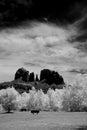 Sedona arizona black and white image of Stock Images