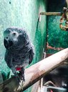 Seductive eye parrot named nemoy Royalty Free Stock Image