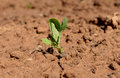 Seed bow grass young growing organic earth farm ground crop grow vegetable gardening sprout food seedling green plant agriculture