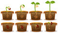 Seed germination in claypot Royalty Free Stock Photo