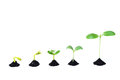 Seed germination sequence of on soil evolution concept Stock Images