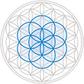 Seed Of Life In Flower Of Life Royalty Free Stock Photo