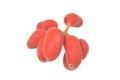 Seed of uvaria rufa blume fruit x carabao teats herb rare in east thailand Stock Photography