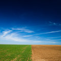 Seeded field and a field lying fallow Royalty Free Stock Photo
