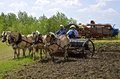 Seeding grain with a team of horses Royalty Free Stock Photo