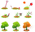 Seeding trees set illustration of isolated on white Royalty Free Stock Image