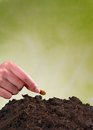 Seeding woman hand seed into pile of soil Stock Images